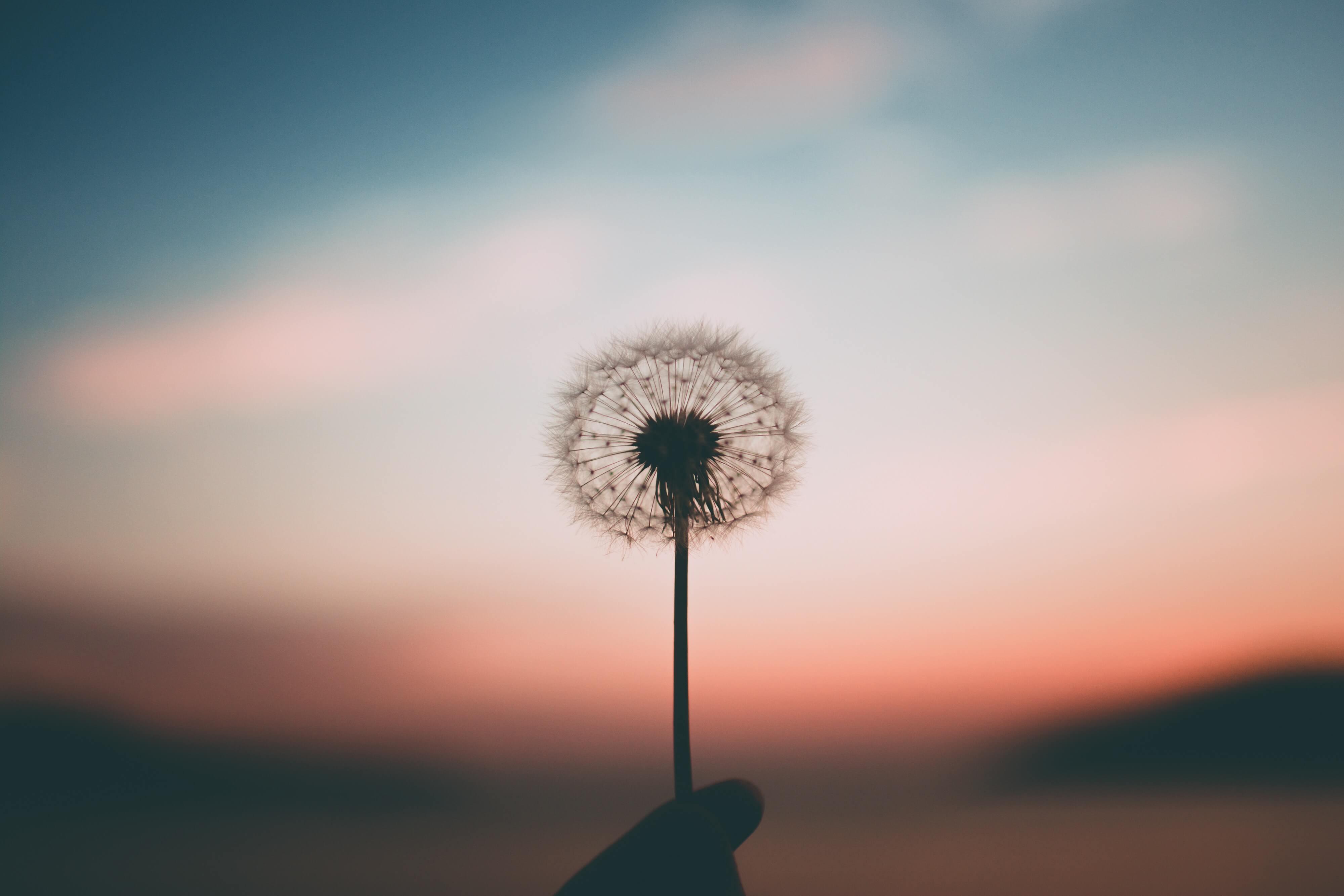 Frigöra tid till kreativiteten och livet